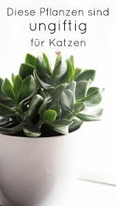 Wohnzimmer Pflanzen Ideen Die Besten 25 Wohnzimmer Pflanzen Ideen Auf Pinterest