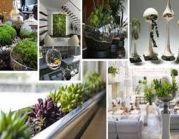 indoor decoration ideas indoor plants adorable decor beautiful