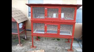 quail farming in nigeria agriculture nigeria