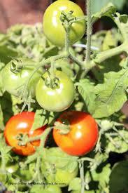 Summer Gardening - how does your garden grow ann u0027s entitled life