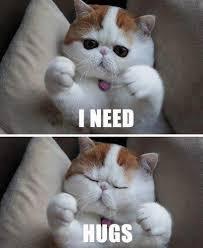 Mean Cat Memes - mean cat memes animaux rigolos magazine julie juliemag com