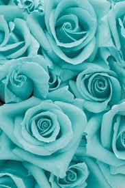 Blue Roses For Sale 25 Best Aqua Rose Ideas On Pinterest Tiffany Blue Color