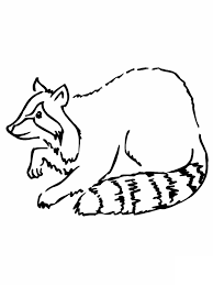 raccoon coloring pages chuckbutt com