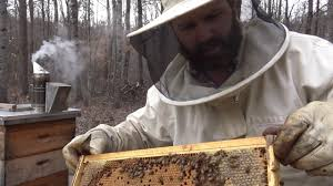 beekeeping for dummies a first look in the bee hive what to look