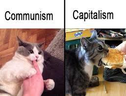 Animal Memes - animal memes the mocking memes