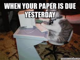Newspaper Cat Meme - fancy newspaper cat meme when your paper is due yesterday kayak
