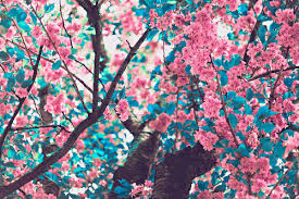 japanese floral tree pictures photos and images for