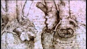 Leonardo Da Vinci Human Anatomy Drawings Leonardo Da Vinci Vortex Studies U0026 Anatomical Drawings Youtube