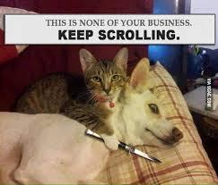 Dog Jokes Meme - keep scrolling meme thefirstpage eu hand picked memes jokes