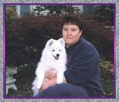 american eskimo dog washington state angelheart eskies american eskimo dogs mercy u0027s page