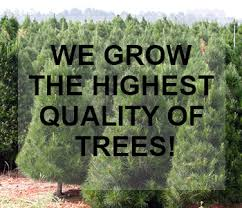 trees big nursery omaha nebraska 402 214 4636