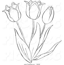 tulips coloring clipart