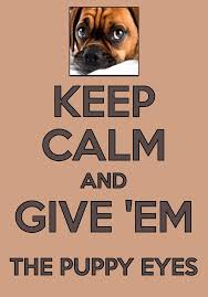boxer dog sayings 421 best boxers images on pinterest boxer love boxer puppies