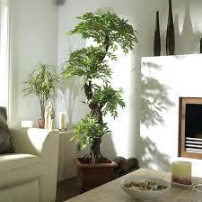 decor plants home indoor home decor house plants decor indoor home decorations ideas