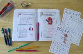 amy brown science excretory system warm ups bell ringers and