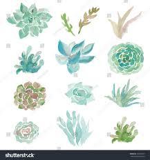 Succulent Plant Watercolor Succulent Vector Vector Plants Vector Stock Vector