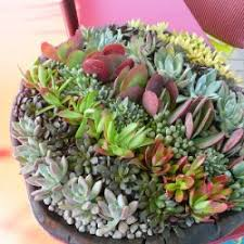 creative succulent planter ideas decor advisor