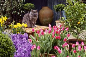 plants toxic to cats photo slideshow