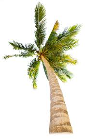 tropical trees types of trees for dk find out
