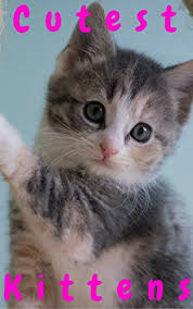 Cute Kittens Memes - cutest kittens 1500 picture cutest kittens cats photobook for kids