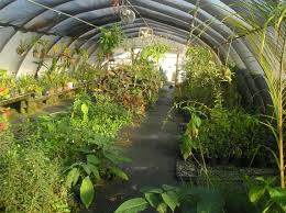 Home Design Tampa Fl Botanical Gardens Tampa Fl Decoration Ideas Collection Simple At