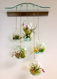 Home Decor Plants Living Room Terrarium Hanging Glass Bubble Air Plant Containers For Indoor
