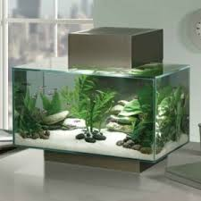 fluval edge pewter aquariums amazing