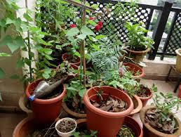 our tiny balcony garden river side farm