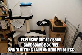 Cardboard Box Meme - cats and boxes paper or plastic savvy pet care