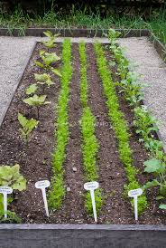 Vegetable Garden Labels by Carrots Stock Photos Images Plant U0026 Flower Stock Photography