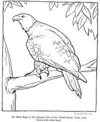realistic animal coloring pages online printable enjoy coloring