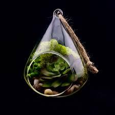 artificial succulent terrarium faux terrarium air plant