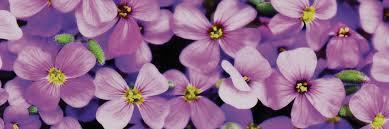 coblands online garden centre buy garden plants online with free