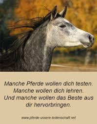 pferde spr che spruch pferde unsere leidenschaft