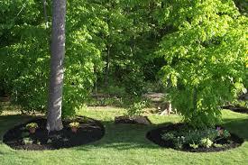 planting a tree transplanting moving trees