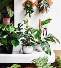 got some green goodies for ya this monstera monday from left to