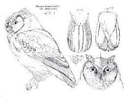 download patterns for wood carving owls plans free