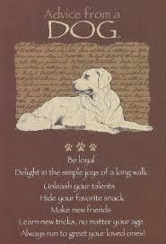 boxer dog in heaven 278 best loss of duke images on pinterest animal quotes dog