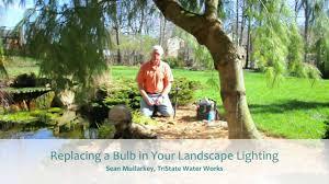 Mr16 Led Bulbs For Landscape Lighting by Replacing A Bulb In Your Landscape Lighting Youtube