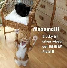 s e katzen spr che 152 best cats images on adorable animals cats