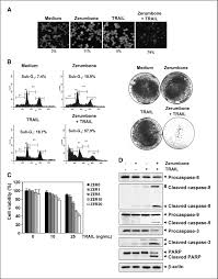 zerumbone enhances trail induced apoptosis through the induction