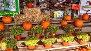 Corn Stalk Decoration Ideas It U0027s Time To Start Decorating For Fall And We Found Lots Of Ideas