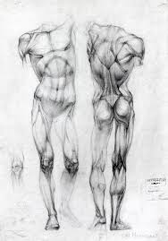 Anatomy Of Women Body Best 25 Anatomy Drawing Ideas On Pinterest Human Drawing