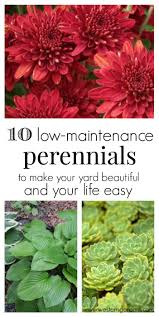 low maintenance perennials best landscaping ideas only on