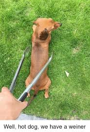 Weiner Dog Meme - well hot dog we have a weiner dog meme on awwmemes com