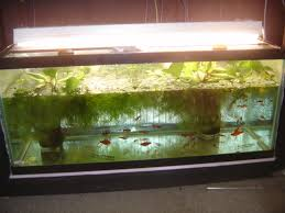 pond fish and plants indoor for winter haas forum