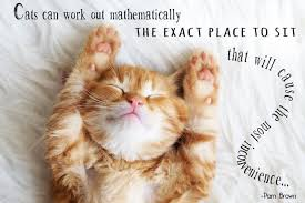 Awesome Quotes About Cats Being - quotes about cats impressive cats quotes pictures images page 2