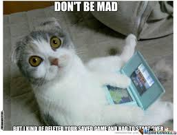 Mad Cat Memes - 20 super duper cute and funny kitty memes sayingimages com