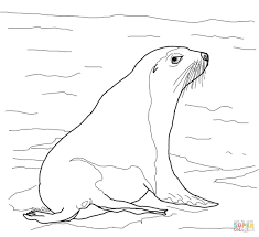 australian sea lion coloring page free printable coloring pages