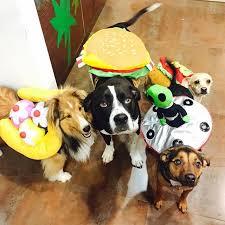 Dogs Halloween Costume Miley Cyrus U0027s Dogs Halloween Costumes Popsugar Pets